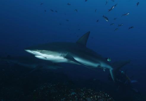 林肯港与大白鲨零距离接触