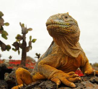 探秘巨龟之岛