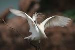 2008年:打鸟攻略--众人拾柴火焰高的鸟友平台