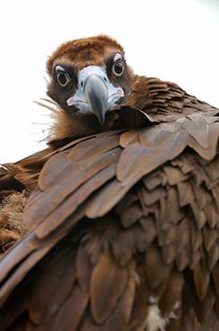 鸟类拍摄技巧之追随拍摄
