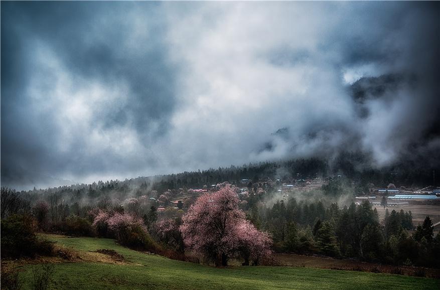 一花一世界 如何表现风光摄影中的意境之美