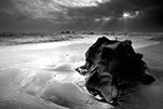 蜂鸟摄影学院 第一讲:《灰 界 如何探寻黑白摄影的意境美》