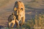 大美非洲:杰夫野生动物摄影
