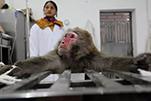实验动物需要被尊重 访SWPA获奖摄影师李风