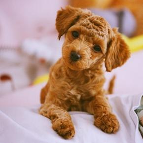 萌宠拍出明星范儿 宠物摄影拍摄技巧分享