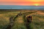 【机友派第70期】非洲野生动物摄影器材漫谈