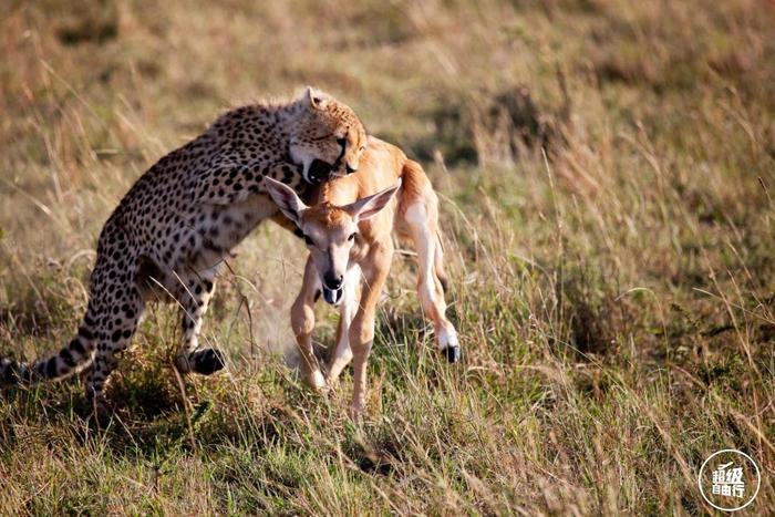 行摄肯尼亚的荒野